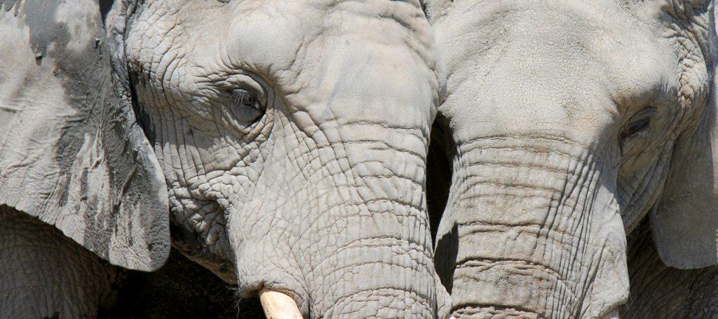 elephants-regards